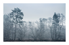 Silvers and Evergreens (K.R.Photography) Tags: trees mist woodland peakdistrict derbyshire fog sony a7ii