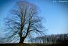 Baum / Tree (R.O. - Fotografie) Tags: baum tree outdoor natur nature blauer himmel blue sky bäume trees rofotografie winter panasonic lumix dmcfz1000 dmc fz1000 fz 1000 nieheim nrw