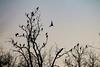 Dormitorio con vistas al Guadalquivir (arapaci67) Tags: naturephotography nature naturaleza guadalquivir aves libre canon70d siluetas jaen villanuevadelareina españa spain