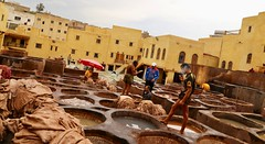 Working in the Tanneries (Alex L'aventurier,) Tags: fès fez maroc morocco tanneries urban urbain city ville architecture yellow jaune cuves people personne work working workers moroccan medina chaouwara chouara dyed teinture leather cuir pits tannery smoke smoking
