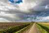 At the end of the road (Ellen van den Doel) Tags: natuur netherlands nature overflakkee nederland weer weather clouds goeree november 2017 road landschap regen weg sky rain landscape lucht sommelsdijk zuidholland nl