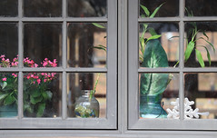 Glass Morning (chantsign) Tags: window glass rectangle flower plant jars pane windowpane windowframe closeup shadow