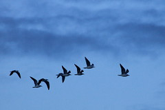 HOURTIN (pbrouqueyre) Tags: hourtin gironde aquitaine medoc ocean