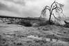 DSCF5922-2050.jpg (RHMImages) Tags: xt2 16mm foresthillbridge landscape bridge bnw fuji monochrome fog bw blackandwhite auburn fujifilm