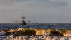 "WL-4 ""Henderika"" (BraCom (Bram)) Tags: 169 bracom bramvanbroekhoven goereeoverflakkee henderika holland nederland netherlands noordzee northsea southholland wl4 zuidholland birds boat branding fishing fishingboat golf gulls mast meeuwen sea sky surf vissen vissersboot vogels wave widescreen winter zee nl"