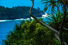 Hawaii-HonokaneNuiValley-53.jpg (Chris Finch Photography) Tags: jungle hawaiiphotography falls rainforest islands hawaii chrisfinchphotography honokanenui pololuvalley hawaiianislands hawaiianisands honokane landcapes landscape landscapephotographer ocean landscapephotography tropics pacific shore pacificocean pacificislands landscapephotographs shoreline river wwwchrisfinchphotographycom beach photographer kohala waterfalls chrisfinch photography island photographs honokanenuivalley bigisland tropical valley