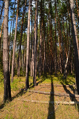 Arrow from shadows (МирославСтаменов) Tags: russia protvino moscowregion pinery shadow forest