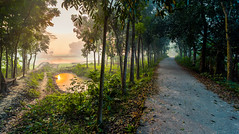 DSC_5512 (Rinathq) Tags: nikon iamnikon d7200 tokina 1116 bangladesh bangladeshi bangladeshiphotographer southasia asia travel colors sunrise morning village trees river sun nature natural destination road journey
