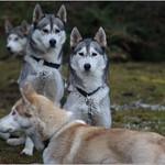 Na gut zwei haben aber mitgespielt, sind das nicht schöne Hunde? thumbnail