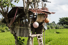 Party Central (A Different Perspective) Tags: bali bamboo corrugated field globe green hut lamp lantern light rice rust