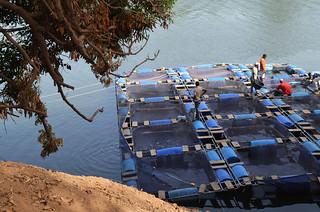 Floating cages, hidden treasures: smart fish farming in Guinea-Bissau