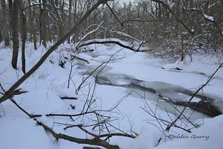 Winter Snow Walk At McCaughrey Springs Woods, Palos Park, Illinois