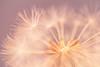 A esos mundos sutiles... (Giacomo della Sera) Tags: light details photography magenta fireworks fractal luz luminous armony armonia fotografia luminescence desenfoque decofused giacomo della sera