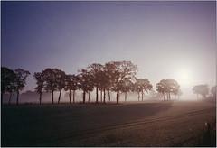 Morgenlicht II (Ulla M.) Tags: nebel fog bäume trees olympusxa selfdeveloped selbstentwickelt 35mm kleinbild reflectaproscan10t licht lichtstrahlen sonnenstrahlen umphotoart dorsten rangefinder analog analogue