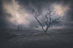 Death Valley (tothfrantisek) Tags: trees landscape clouds bird surreal moon which storm shadow