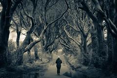 Decisions (Nagraman) Tags: northofireland northernireland ireland lightroom splittone trees minolta minoltalens sony sonyalpha sonyalpha99 gameofthrones county'strim coantrim armoy antrim darkhedges ulster