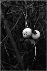 12 - White fruits (melina1965) Tags: 2018 janvier january bourgogne saôneetloire saintvallier burgondy nikon coolpix s3700 hiver winter macro macros noiretblanc blackandwhite bw fruit fruits