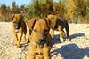IMG_1888 (burhansakir) Tags: adana kozan köpek çiçek kirmizi gül çete türk türkiye doğa hayvan