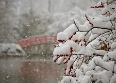 Duke Snow Day 2 (akintsy_photo) Tags: duke university snow south landscape winter garden park