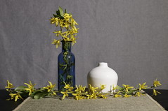 Still Life with Forsythia (N.the.Kudzu) Tags: home tabletop stilllife blue bottle jug flowers forsythia canon70d