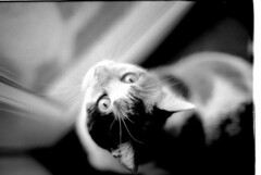 OM2N jh (MrLightyear) Tags: rodinal om2n 14 stand standdevelopment cats film fp4 fp4plus