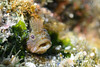 20180120-DSC_8185.jpg (d3_plus) Tags: jogashimaisland 185mm 三浦 水中 三浦半島 fish marinesports apnea closeuplens 風景 息こらえ潜水 zoomlense ucl165m67 ウォータープルーフケース 185mmf18 sky underwater nikon1 景色 miurapeninsula 魚 クローズアップレンズ watersports wpn3 nikon sea inonucl165m67 japan miura ニコン 50mmf18 50mm ニコン1 nikonwpn3 inon 素潜り 神奈川 1nikkor185mmf18 nikkor 城ヶ島 スキンダイビング nikon1j4 マクロ drive 海 snorkeling ワイコン diving skindiving scenery イノン ズーム マリンスポーツ j4 port 空 日本 kanagawa waterproofcase シュノーケリング
