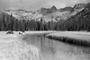 Day 35 of 40; Tribute to Ansel Adams (photography by Derek G) Tags: landscape blackandwhite anseladams tribute wilderness mountains meadow forest river highsierra yosemitenationalpark yosemite mtanseladams hiking backpacking camping horses mules horse mule grazing water