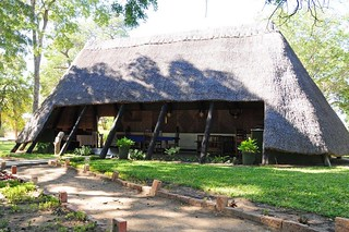 Zimbabwe Cape Buffalo Hunt 93