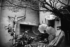 Umbrella (shigec Märchen) Tags: film モノクロ monochrome 白黒写真 銀塩 blackandwhite bw daily tokyo rollei35 trix trix400 トライx