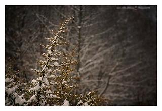Snow apex