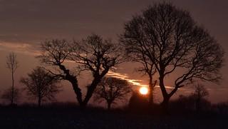 Die Sonne geht auf in Bergenhusen, Stapelholm (4)