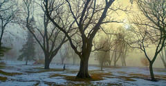 misty morning run (DeZ - photolores) Tags: guelphcanada royalcitypark trees winter wideangle lg5 hdr mist fog dez snow