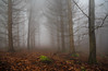 green stone (vd1966) Tags: aoi elitegalleryaoi bestcapturesaoi waldboden moos stein stamm fog forrest tree branches aeste