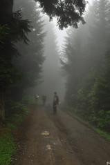 today is misty.. (aycasan) Tags: child cow aycasan hıdırnebi akçabat trabzon