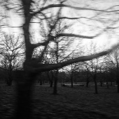 A cold day (Francisco (PortoPortugal)) Tags: 0282018 20151221fpbo1964 bw bn pb árvores trees cold frio paisagem landscape portugal portografiaassociaçãofotográficadoporto franciscooliveira