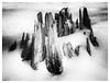 _DSC4169-Mr (gillesporlier) Tags: treestump strain souche arbre monochrome bw nb nikon landscape paysage winter hiver texture gray nuance
