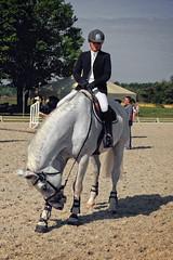 Ukraine. Brech. Peverence (vzotov.doc) Tags: horse ukraine brech xf1855mmf284 r lm ois vladimir zotov peverence fujifilm xt1