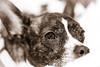 "52 Weeks - 2018  - Week 6 - Raining Cats and Dogs (norasphotos4u) Tags: 52weeksin2018 canonef100mmf28lisusmmacro canon5dmkiv pets macro social ©noraleonard dogs ""week62018 weekstartingmondayfebruary052018 rainingcatsanddogs"""