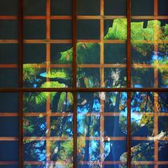 構成=Composition-140/Organisms constrained by geometry (kouichi_zen) Tags: tree lattice square nature architecture reflection wood window glass