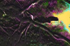 Desde abajo (seguicollar) Tags: árbol vegetal vegetación tronco branch ramas color colorido cielo imagencreativa photomanipulación art arte artecreativo artedigital virginiaseguí