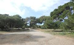 Son Real, Mallorca , NGID1656081845 (naturgucker.de) Tags: ngid1656081845 naturguckerde sonreal mallorca cwolfgangkatz