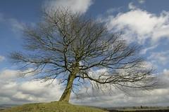 Summit (Tony Tooth) Tags: nikon d7100 tamron 1024mm tree hillock summit knoll grendon staffs staffordshire staffordshiremoorlands