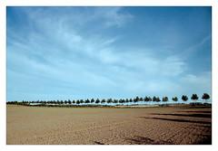 analog - Praktica MTL 5B / Exakta 28/2.8 - Kodak Gold 200 (tom-schulz) Tags: prakticamtl5b exakta2828 kodakgold200 film 35mm analog vuescan v330 frame rahmen stralsund thomasschulz feld himmel wolken baumreihe sky clouds