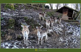 Meine Tierfreunde/My animal friends/我的动物朋友/أصدقائي الحيوان/Мои друзья животных/Mes amis les animaux