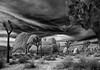 A grain of sand (Robyn Hooz) Tags: deserto joshuatree clouds bw monochrome alberi rocce california rocks sand sabbia