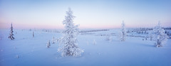 Single fir tree panorama (czdistagon.com) Tags: year fir season forest white tree background snow winter panorama nature frost sky snowfall vacation fairytale outdoor landscape natural frozen light hoarfrost holiday beauty ice new snowstorm cold park snowy beautiful freeze weather fairy newyear silver card seasonal december snowflake blue january travel november flora postcard wood moon winterbackground happy