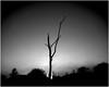 Merthyr Mawr 1953. Trees 2. (brian.batters (B-C-B)) Tags: merthyrmawr tree treetrunk candlston firs