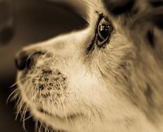 "Speckled Snout (risaclics) Tags: macro mondays make me smile 50mmmacro 7dwf animals january2018 nikond610 risadogs ""speckled"" macromondays makemesmile"