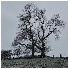The Starkness of Winter... (zapperthesnapper) Tags: tree nature cumbria stark sonyimages sonycybershot sonyrx100 sony wintertime winter wintermonths snow