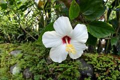 WOL Calauan Laguna Philippines Day 1 (145) (Beadmanhere) Tags: philippines flowers